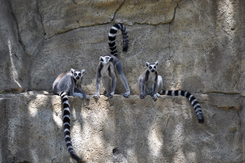 Zooloski vrt Limasol Kipar