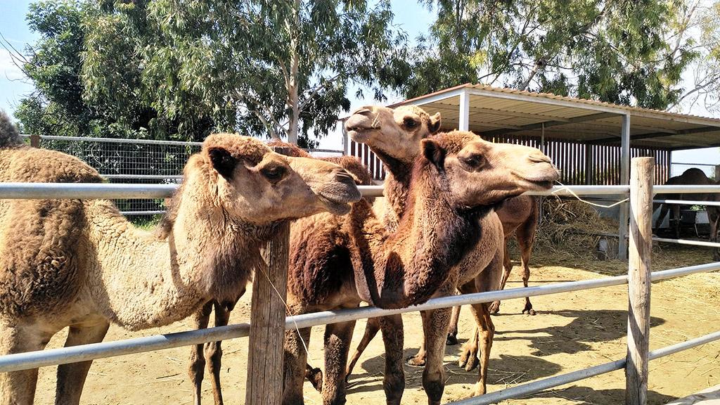Park kamila Mazotos Larnaka Kipar