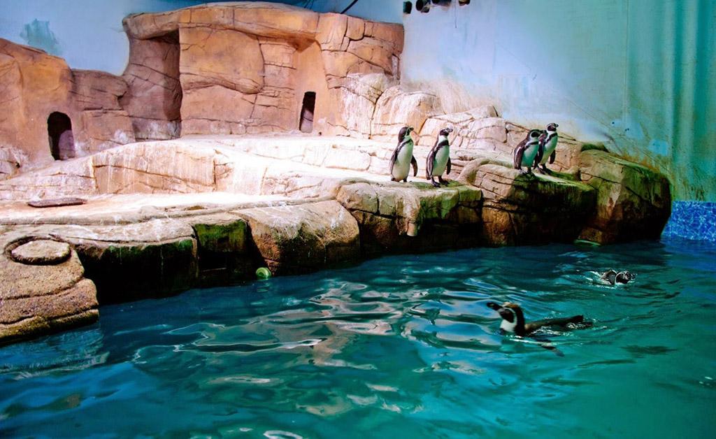 Ocean Aquarium Protaras Kipar