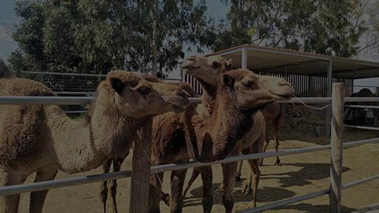 Zoološki vrtovi i zabavni parkovi