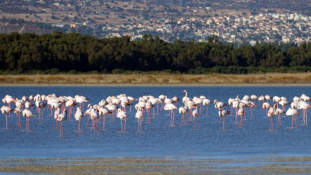 Jezero Akrotiri Limasol Kipar