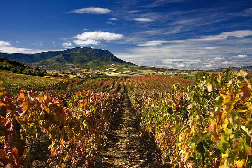 Vinogradarstvo na Kipru