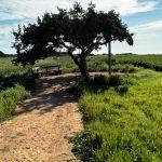 Juniper Tree Aja Napa Kipar