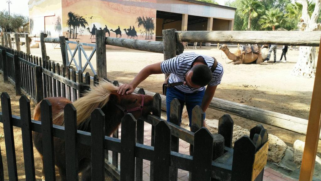 Park kamila u mestu Mazotos na Kipru